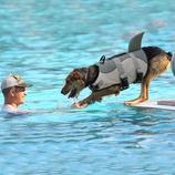 Medium and Larger Dogs Petilleur Dog Life Jacket Swim Dog Vest Lifejacket for Small S, Clownfish